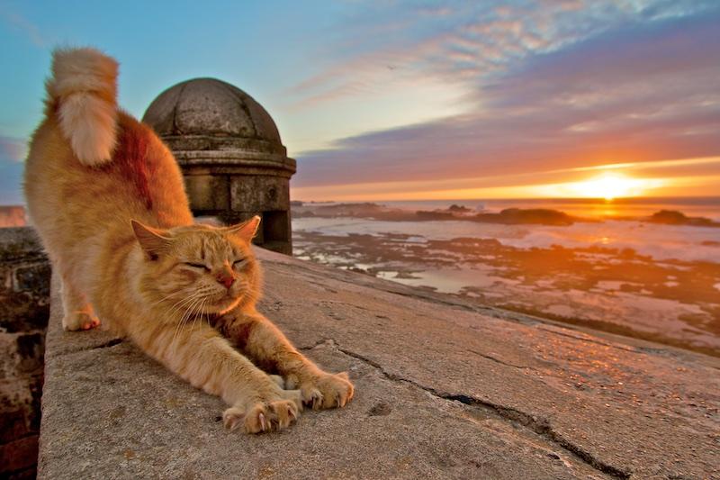 Les plus beaux couchers de soleil au Maroc 15