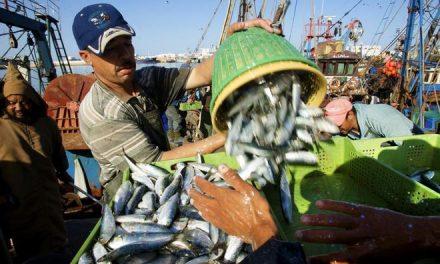 La FCPM insiste sur la nécessité de prendre en compte les défis du secteur de la pêche maritime