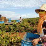 """Génération Green 2020-2030"""" va améliorer les conditions de vie dans le monde rural"""