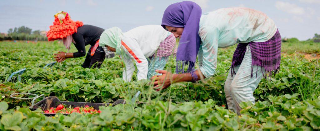 De jeunes marocains retournent à la terre grâce à l'appui de la Banque africaine de développement 2