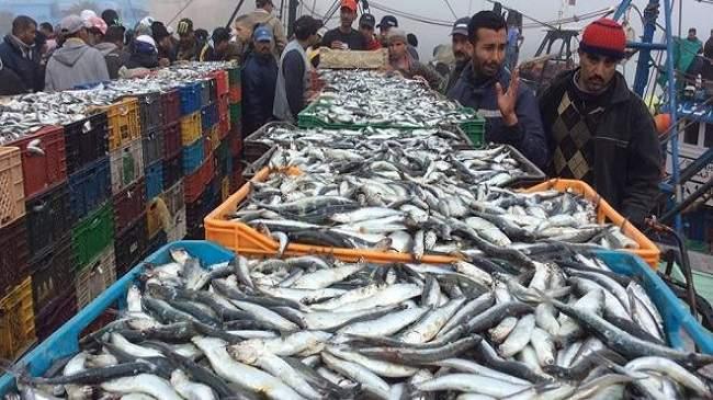 Pêche côtière et artisanale clôture l'année 2019 en évolution