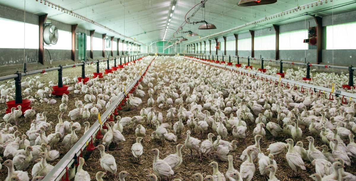 BEI: Prêt de 25 millions d'euros au groupe avicole Zalar Holding