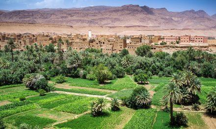 Le Maroc multipliera son PIB agricole d'ici 2030