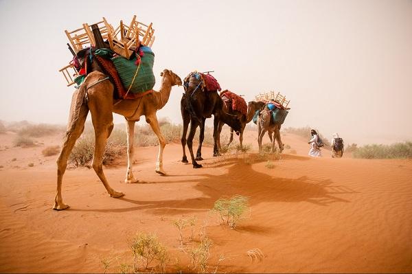 Caravane culturelle et scientifique en sud Maroc