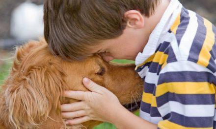 Coronavirus : les chiens entraînés à détecter les virus