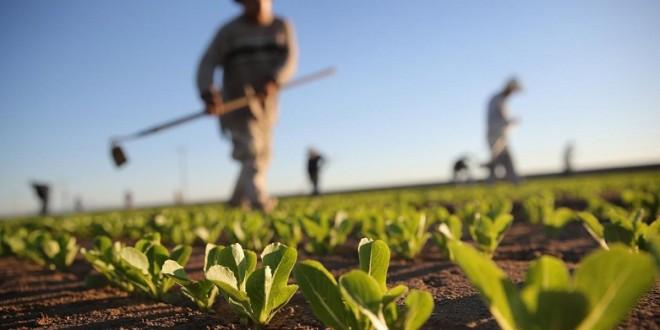 """""""Génération Green"""" : Le Modèle Agricole Marocain, un exemple à suivre"""