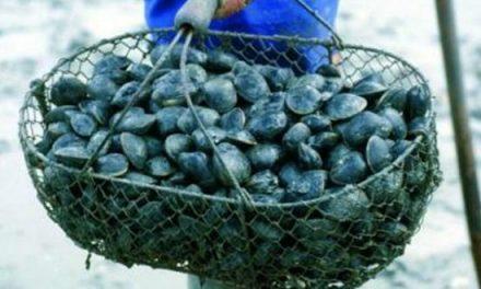 Dakhla: Interdiction de la récolte et de la commercialisation des coquillages issus de la zone Boutalha coque