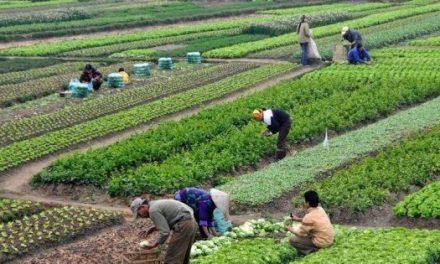 Héritage: Changement important dans l'attribution des terres agricoles de l'Etat
