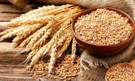 Céréales : les mesures pour assurer la commercialisation de la récolte nationale