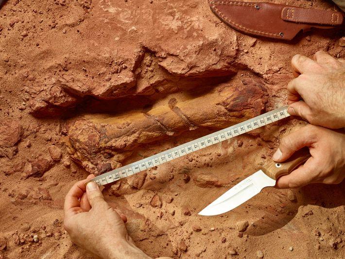 """Maroc : découverte des restes du premier dinosaure aquatique """"Spinosaurus"""" connu au monde 2"""