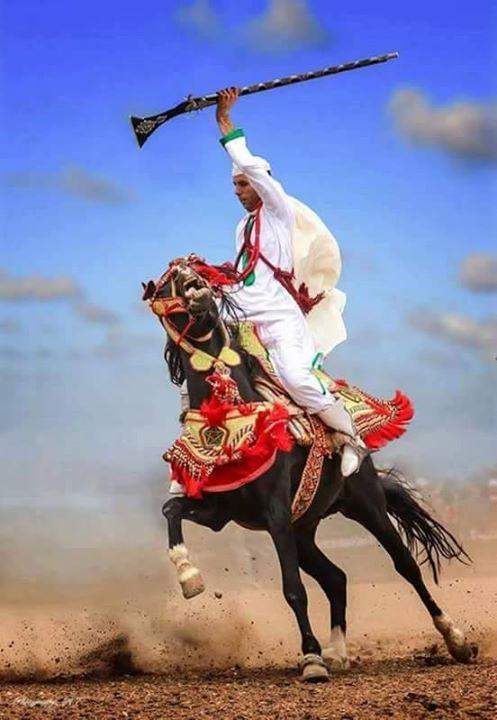 Les chevaux et la fantasia au Maroc 5
