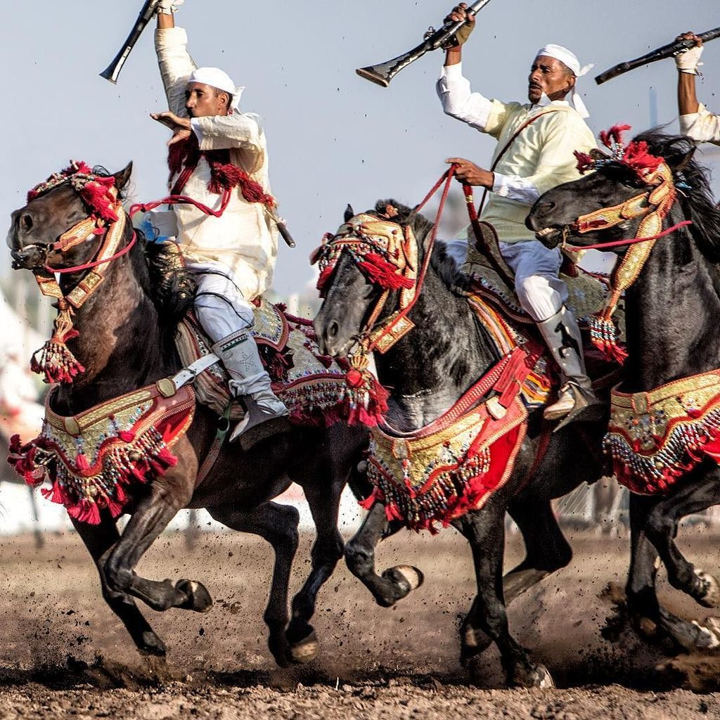 Les chevaux et la fantasia au Maroc 1