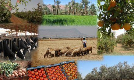 Les recettes d'exportation des produits agricoles ont atteint jusqu'à présent 17,5 MMDH