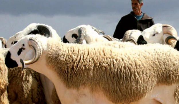 L'ANNULATION DE L'AID AL-ADHA SERAIT UN DÉSASTRE POUR L'AGRICULTEUR MAROCAIN