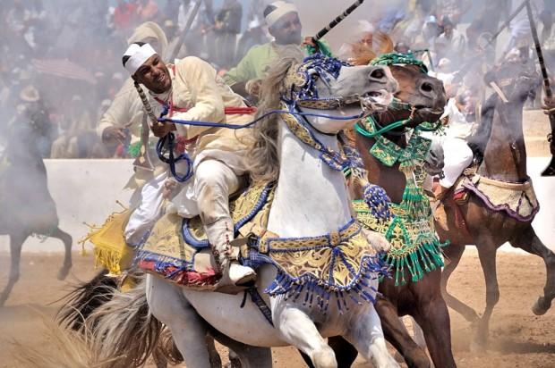 Les chevaux et la fantasia au Maroc 12