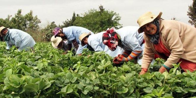 l'agriculture et l'agroalimentaire sont vectrices de création d'emplois et de prospérité au Maroc