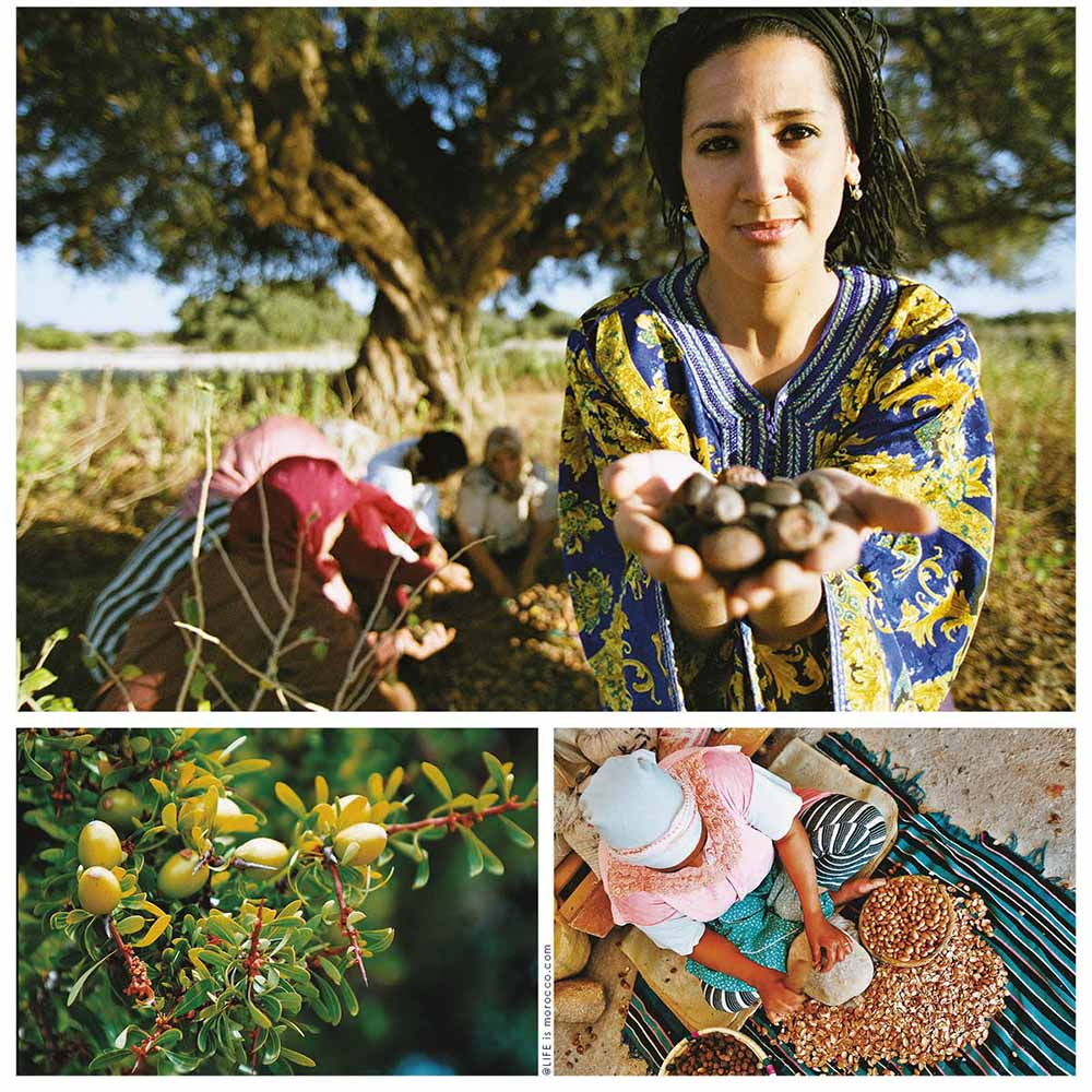 Plantation de 50.000 hectares d'arganiers au Maroc d'ici 2030 1