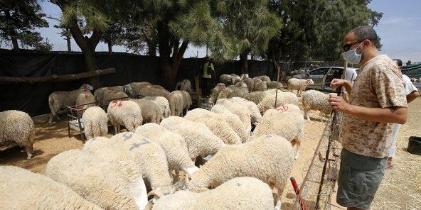 Aid-El-Adha: Fermeture de souks à bestiaux pour non respect des mesures sanitaires