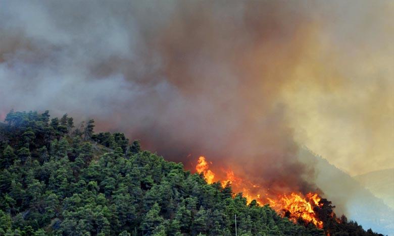 Incendie de forêt dans la préfecture de M'diq-Fnideq 1