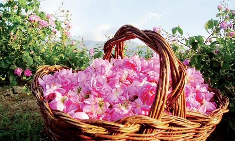 La Vallée des Roses et El Kelaa des M'Gouna 2