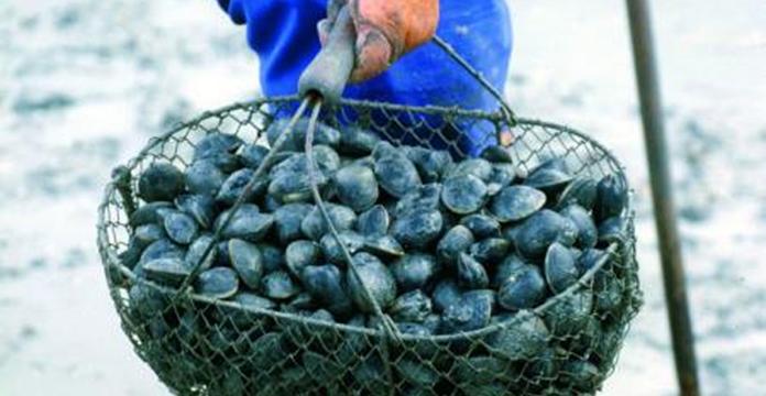 La récolte ET LA COMMERCIALISATION des coquillages interdite à Oued Negro-M'diq et Cabo Negro-Martil