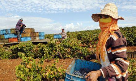 L'Agriculture, pièce-maitresse de la relance économique AU MAROC