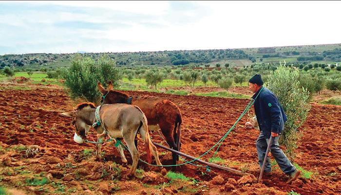 L'Agriculture, pièce-maitresse de la relance économique AU MAROC 1