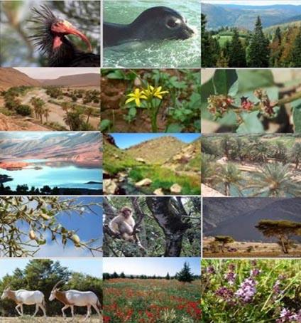 Sommet de la Biodiversité: le Maroc plaide pour une action mondiale urgente