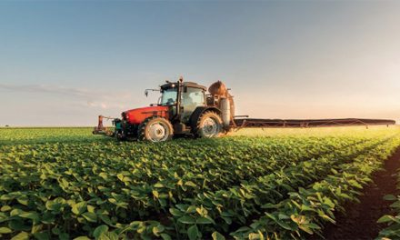 Saison agricole 2020-2021: 1,6 million de quintaux de semences disponibles