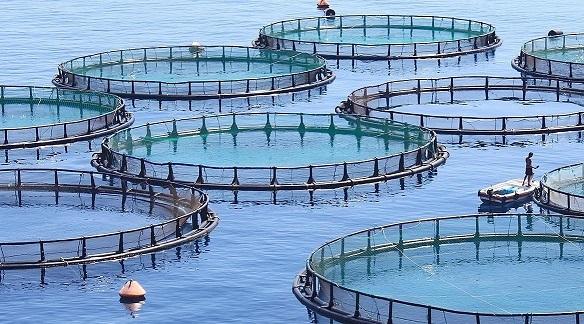 Souss-Massa est fin prête à lancer ses 24 projets aquacoles
