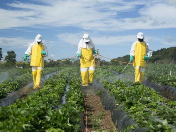 Campagne Agricole 2020-2021 – Le Crédit Agricole du Maroc déploie un dispositif d'accompagnement à 360°