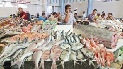 Hausse de 7% des exportations marocaines des produits de la mer à fin septembre 2020 3