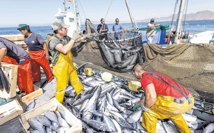 Hausse de 7% des exportations marocaines des produits de la mer à fin septembre 2020