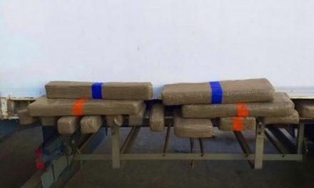 Tanger Med: Avortement de deux tentatives de trafic de 745 kg chira, deux interpellations