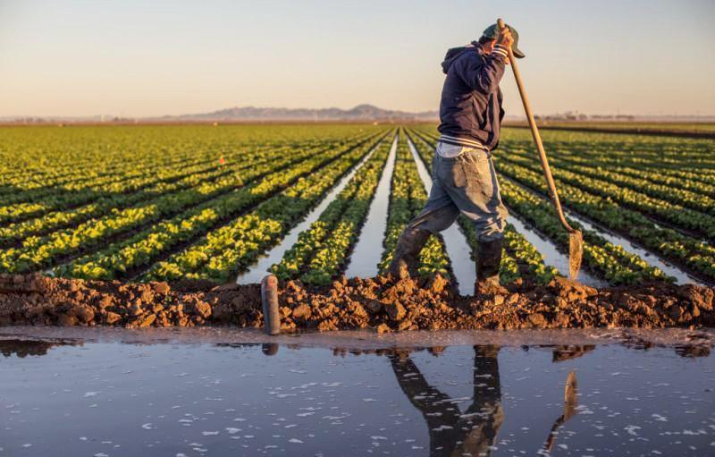 Les perspectives de la campagne agricole 2020/2021  s'améliorent avec les dernières précipitations