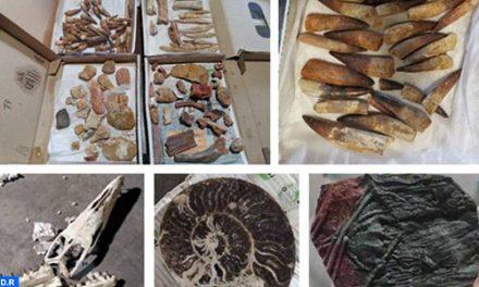 Casablanca : Mise en échec d'une tentative d'exportation illicite de pièces géologiques