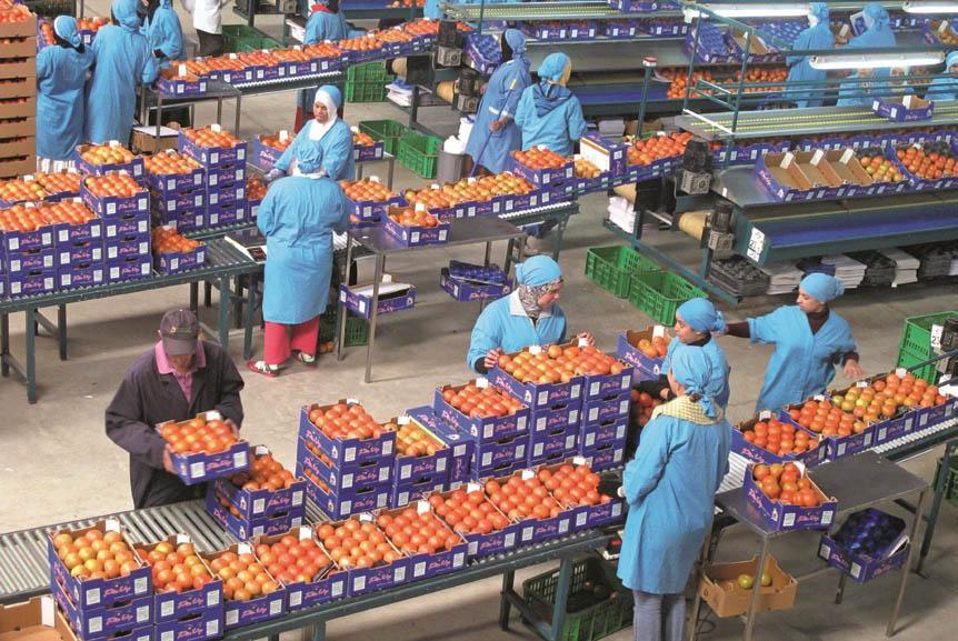 Plus de 474.000 tonnes d'exportations de fruits et légumes jusqu'en janvier