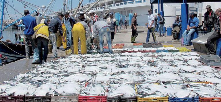 Pêche: Repli de 7% des débarquements en 2020