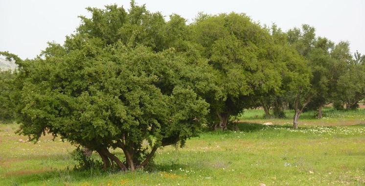 PLANTATION DE 2.205 HA D'ARGANIERS DANS LE CADRE DU PROJET DARED 2