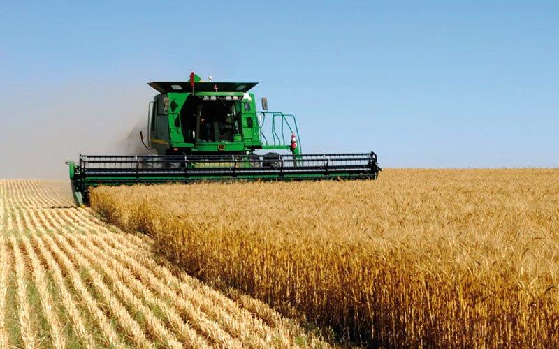 La superficie de céréales d'automne du Maroc a atteint 4,3 millions d'hectares