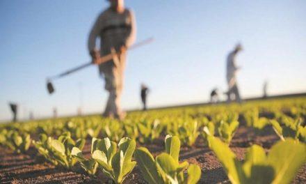 Campagne AGRICOLE 2020-2021 : Le ministère de l'agriculture SOULIGNE L'IMPACT POSITIF des dernières pluies
