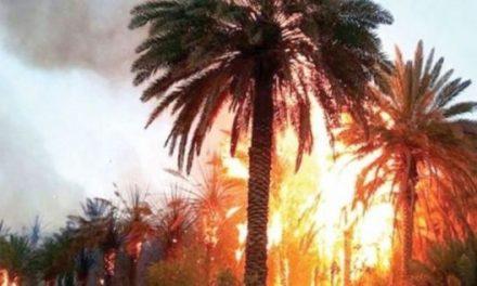 Guelmim: Plusieurs palmiers ravagés par le feu dans l'oasis Tighmert