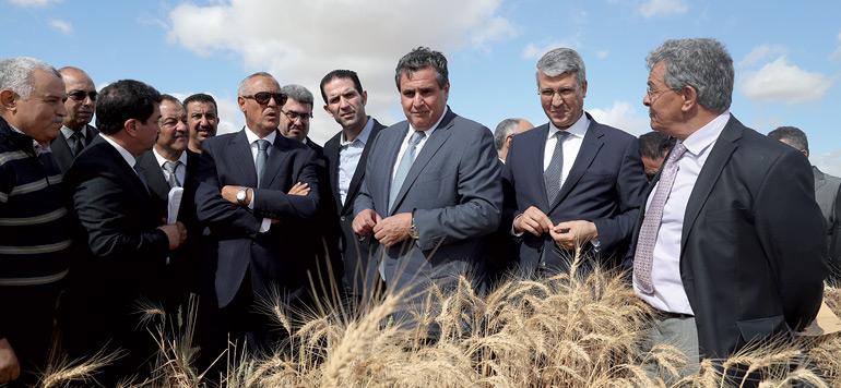 Agriculture: Akhannouch veut renforcer le coopératives agricoles nouvelle génération
