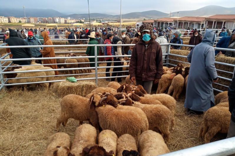 Aïd Al Adha: 8 millions de têtes d'ovins et de caprins seront identifiées