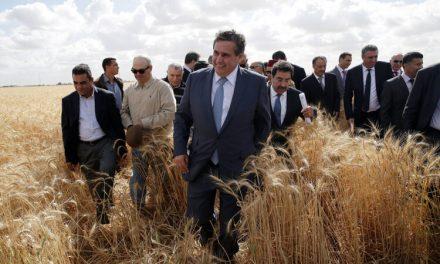 Une excellente campagne agricole CÉRÉALIÈRE 2020/2021 POUR LE MAROC
