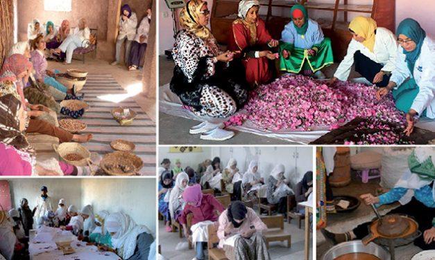 Coopératives: Un recensement général lancé cette année