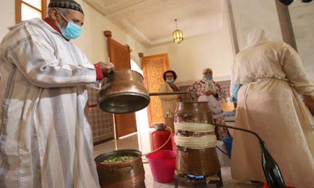 Marrakech revivifie la tradition de distillation de la fleur d'oranger