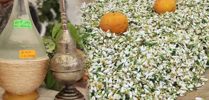 Marrakech revivifie la tradition de distillation de la fleur d'oranger 1