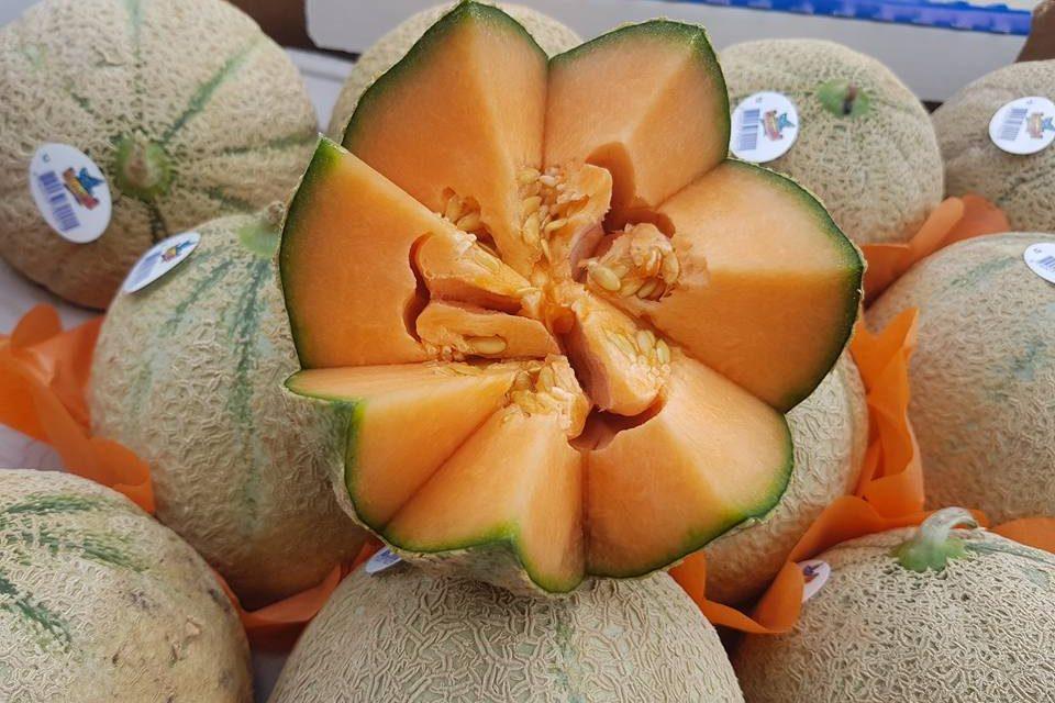 Le Maroc se hisse à la 4ème place des fournisseurs de melons de l'UE