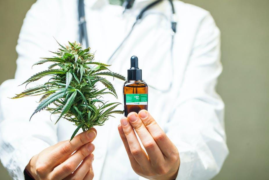 Le Parlement MAROCAIN légalise FINALMENT l'usage thérapeutique du cannabis 1